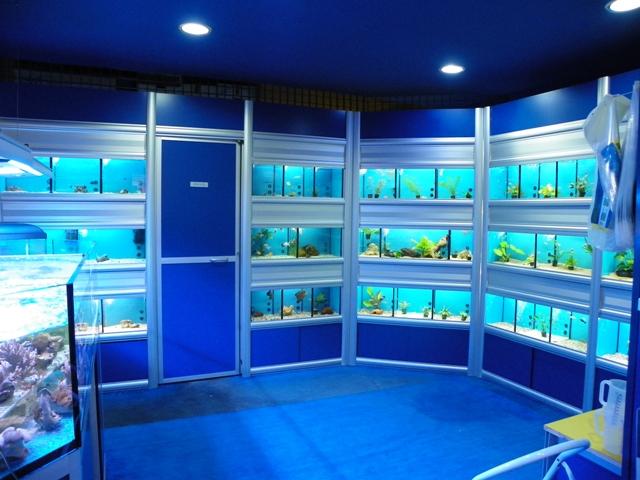 Mondo sommerso tutto per acquari a messina for Acquari da arredamento