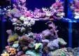 acquari-pesci-tropicali-arredo-interni-esterni-pfish-ok-world-palermo-01.jpg