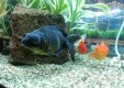 acquari-pesci-tropicali-arredo-interni-esterni-pfish-ok-world-palermo-03.jpg