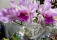 Décorations-fleurs-plantes-le-fleuriste-Messine-05.JPG