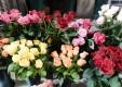 Décorations-fleurs-plantes-le-fleuriste-Messine-07.JPG