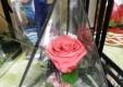 Décorations-fleurs-plantes-le-fleuriste-Messine-09.JPG