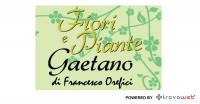 Fiori e Piante da Gaetano - Messina