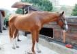 maneggio-scuola-di-equitazione-pony-club-dello-stretto-messina-04.JPG