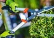 manutenzione-giardini-potatura-fitoterapia-genova-(1).jpg