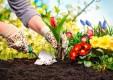 mantenimiento-jardines-poda-herbolaria-Genova (10) .jpg
