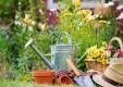mantenimiento-jardines-poda-herbolaria-Genova (2) .jpg