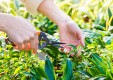 mantenimiento-jardines-poda-herbolaria-Genova (4) .jpg