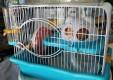 shop-food-animal-grooming-the-fingerprint-san-pietro-clarenza-Catania-05.JPG