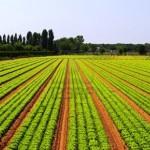Tutto per l'Agricoltura